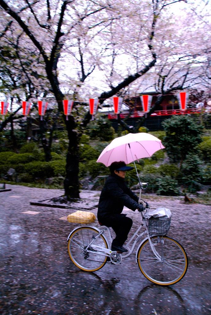 Ueno Park Tokyo Sakura Cherry Blossoms