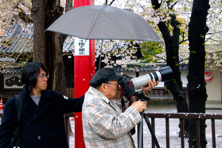 Photographing Cherry Blossoms