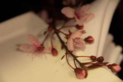 Napkins and Cherry Blossoms